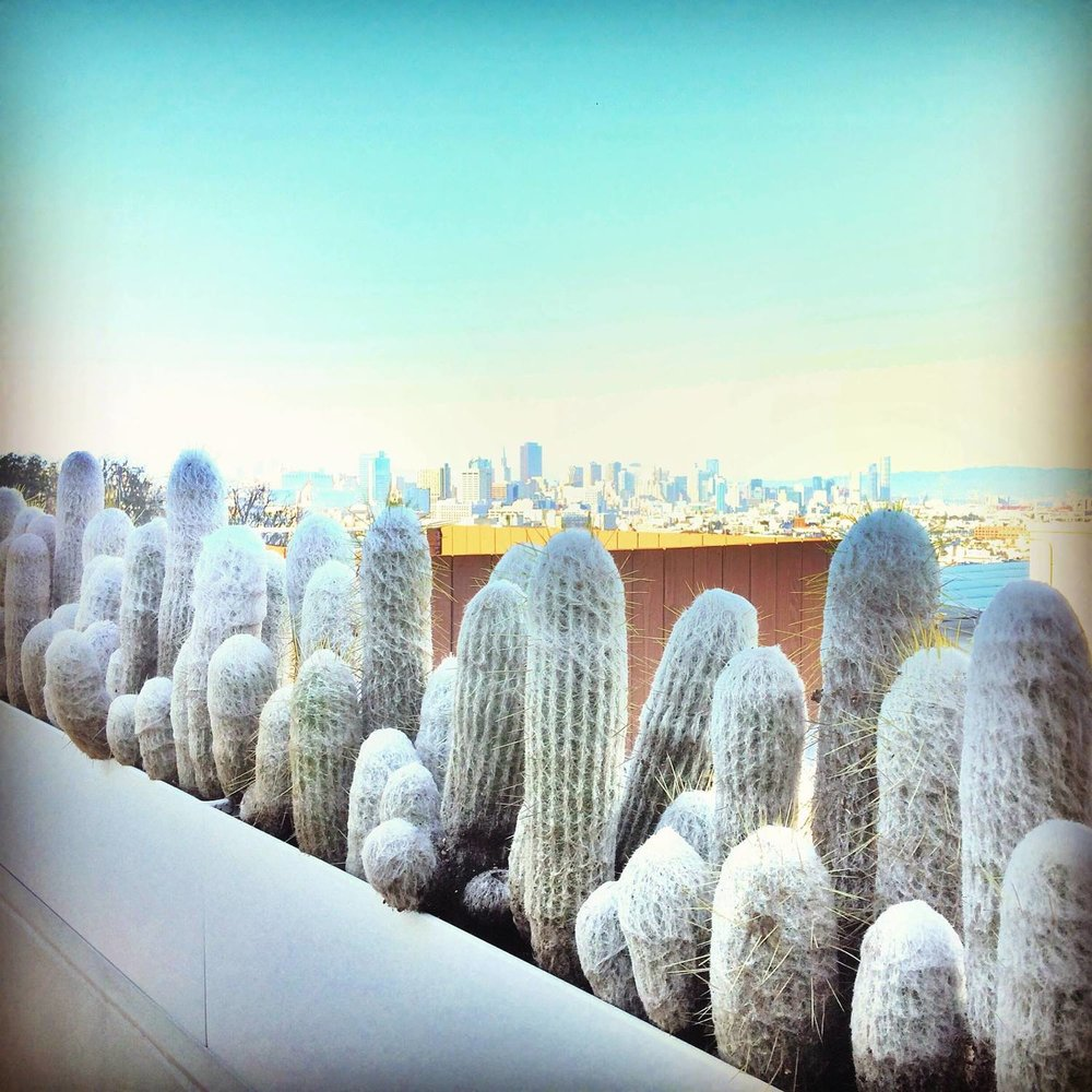 cacti+-+250+cumberland.jpg