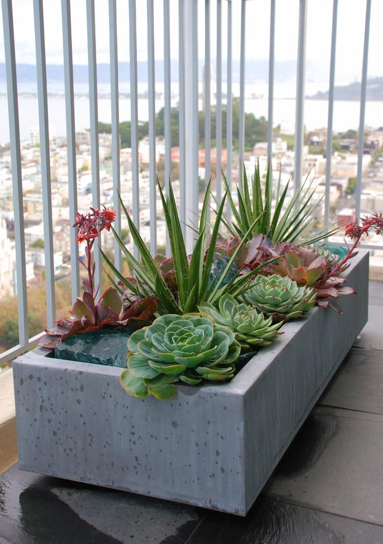 succulents+in+ORE+zinc.jpg