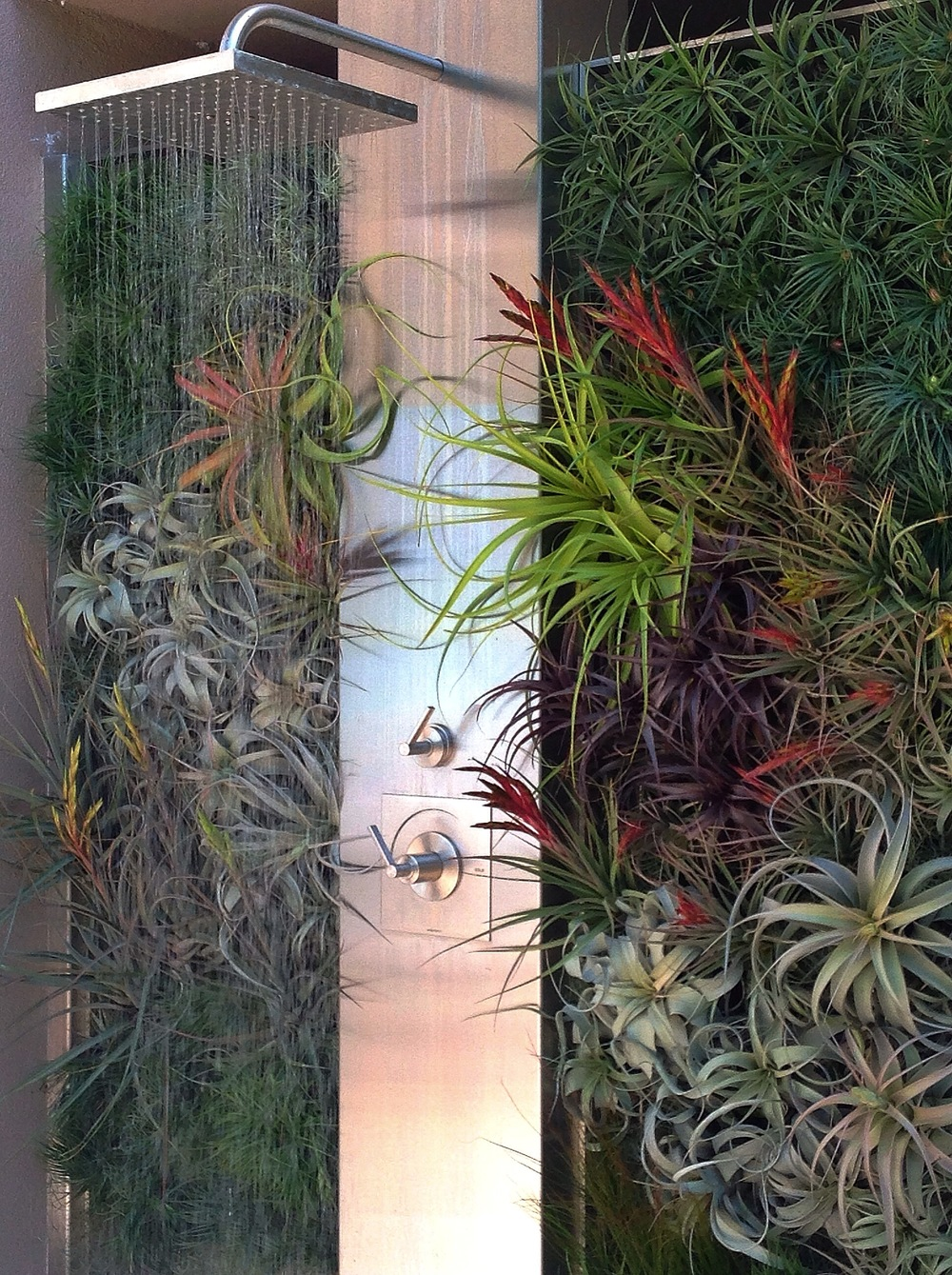 tillandsia.jpeg