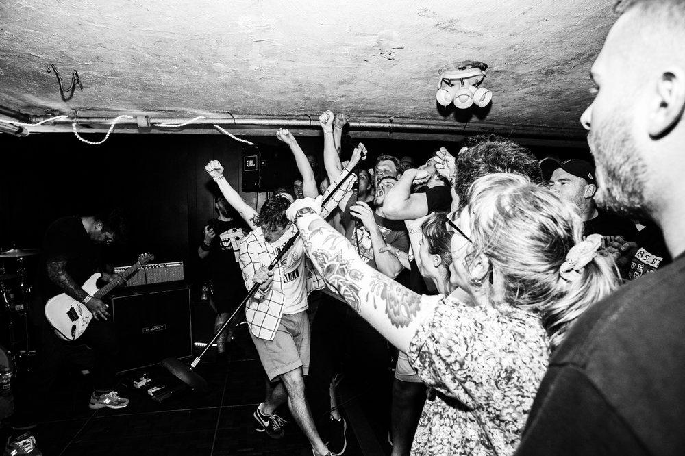 fiddlehead-4.jpg