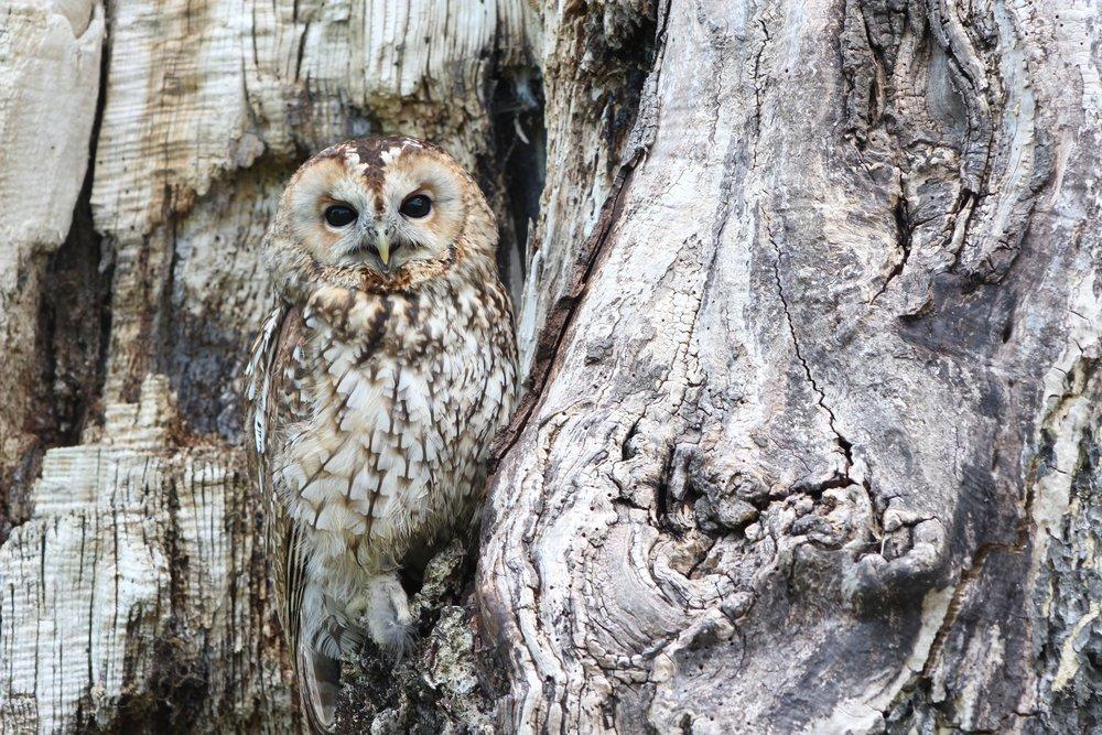 owl-1576572.jpg