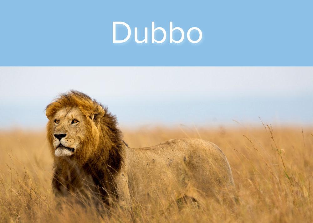 dubbo_zoo box.jpg