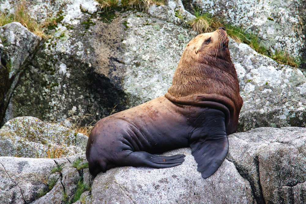 Sea Lion 2.jpg