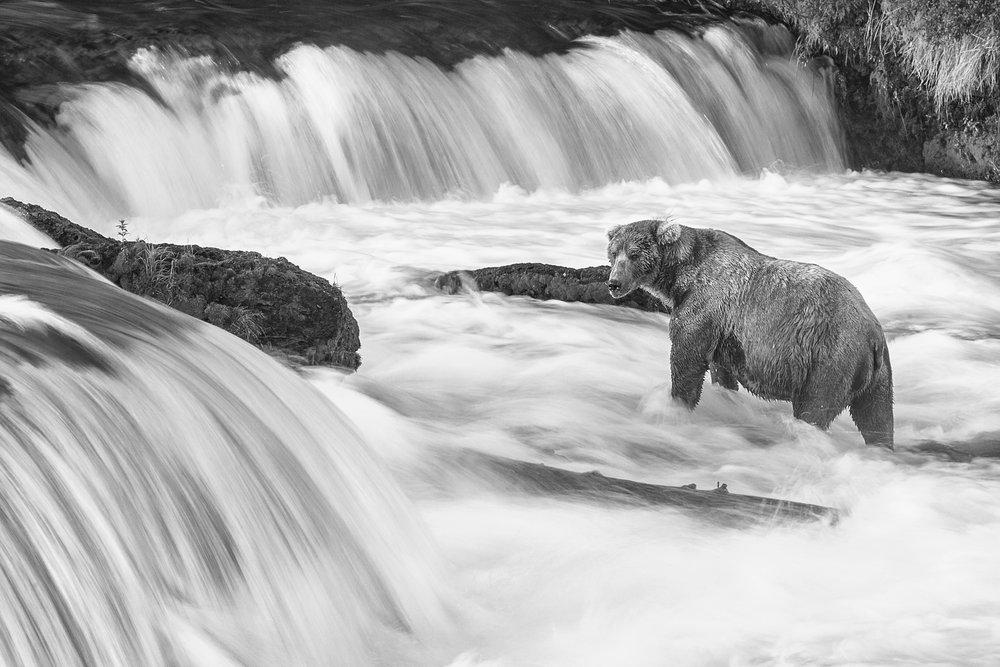 Bear B&W.jpg