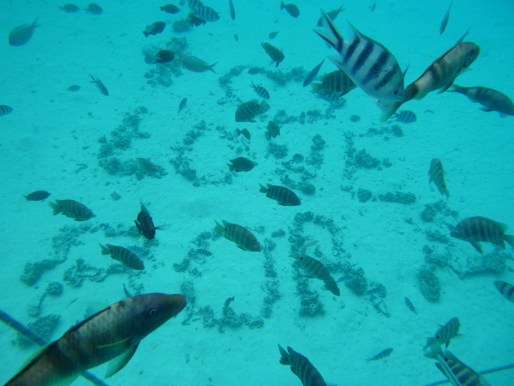 Fish graffiti on the sea bed