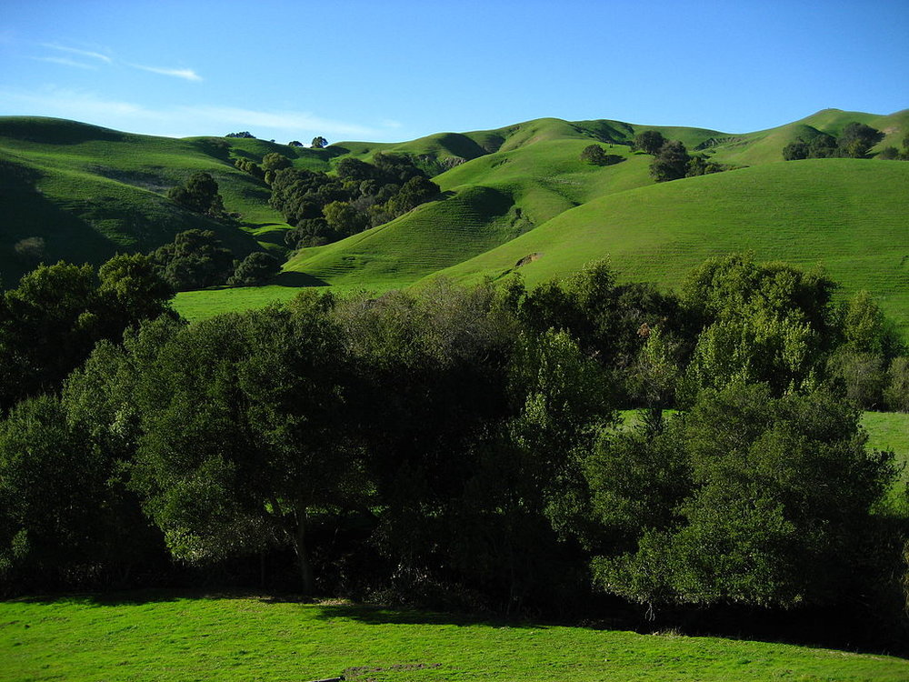 Lafayette Ridge, CA, Wikimedia Commons, By No machine-readable author provided. Mrbilal1987~commonswiki assumed (based on copyright claims). [Public domain], via Wikimedia Commons