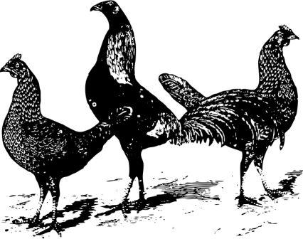 chickens, by johnny_automatic, openclipart.org