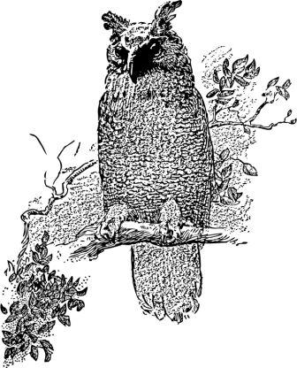 "johnny-automatic-owl-800px-black and white pin and ink of owl sitting on branch as if to say, ""welcome.""-by johnny_automatic, openclipart.org."