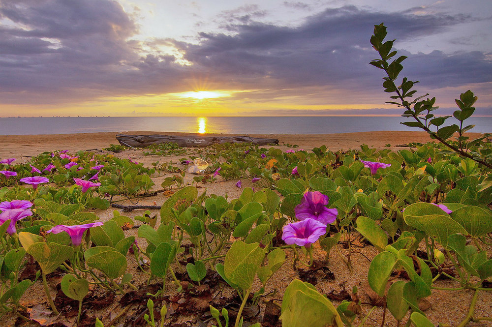 Beach at dusk with clouds and pink flowers,  Photo by Pok Rie from Pexels , pexels.com