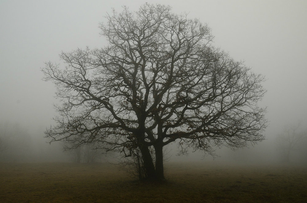 Oak tree, fog, solitude; by Sophie07, courtesy of  pixabay.com