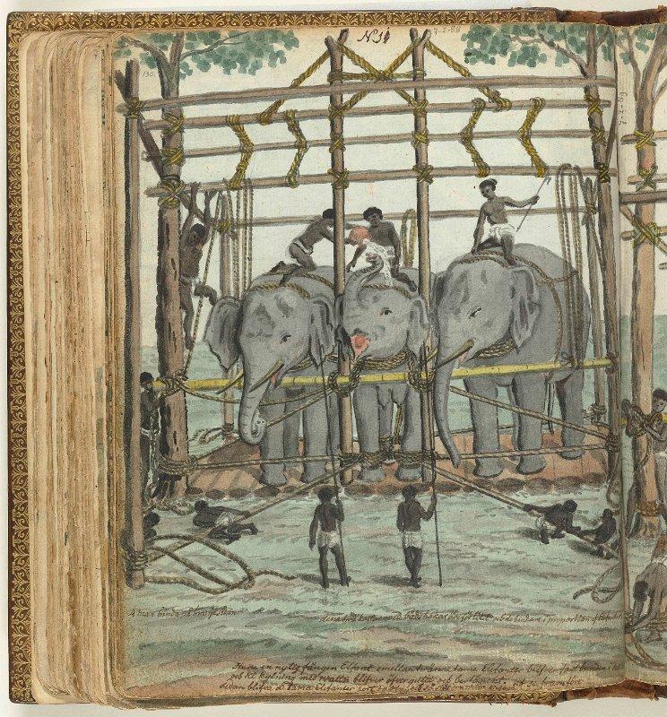 793 Temmen van een olifant NG-1985-7-2-88.jpg