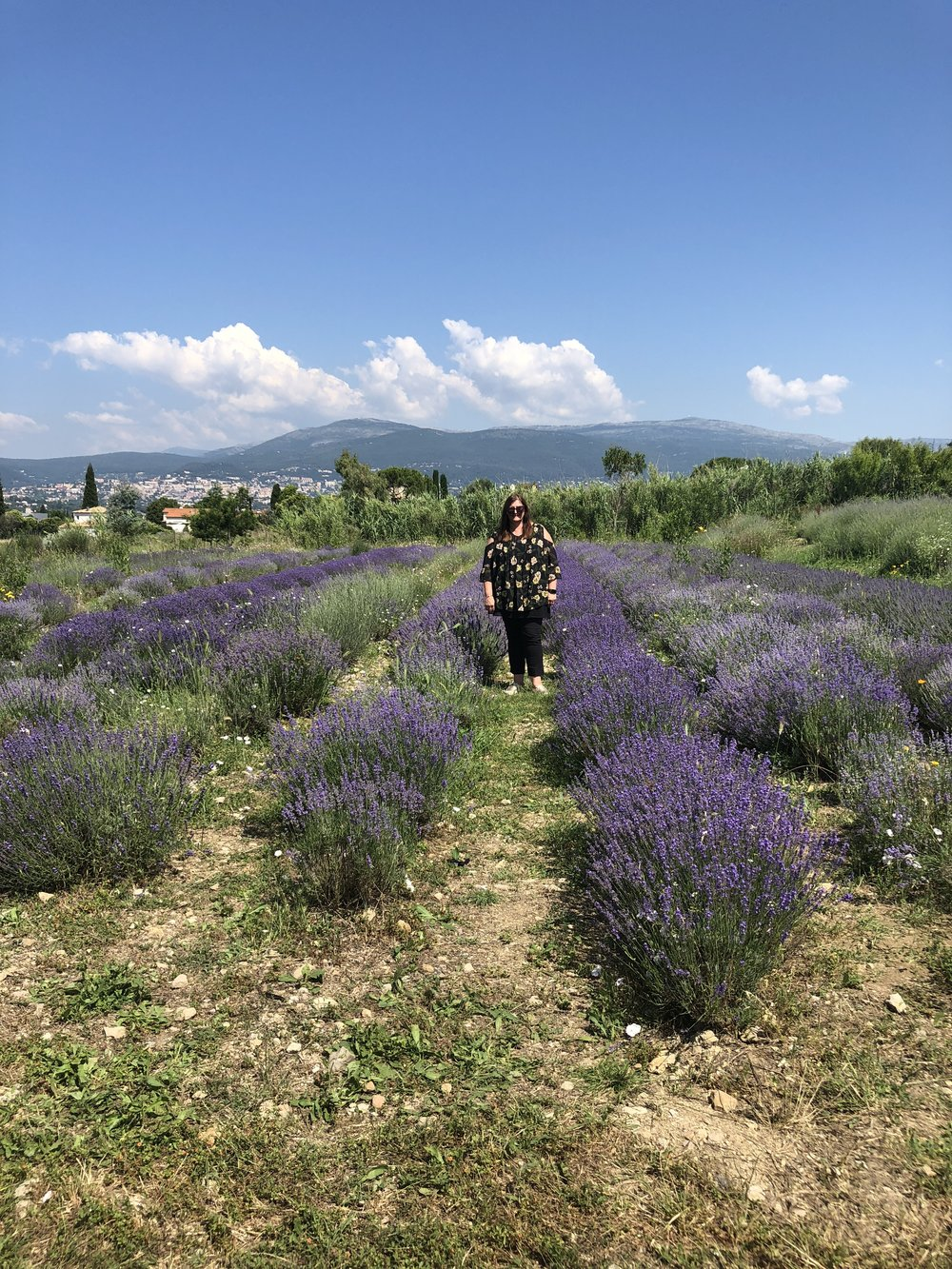 Lavender fields near Grasse