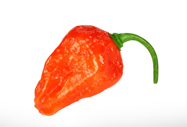 The Naga - The Naga is famously known as the World's hottest chilli family with a fruity aroma and taste.