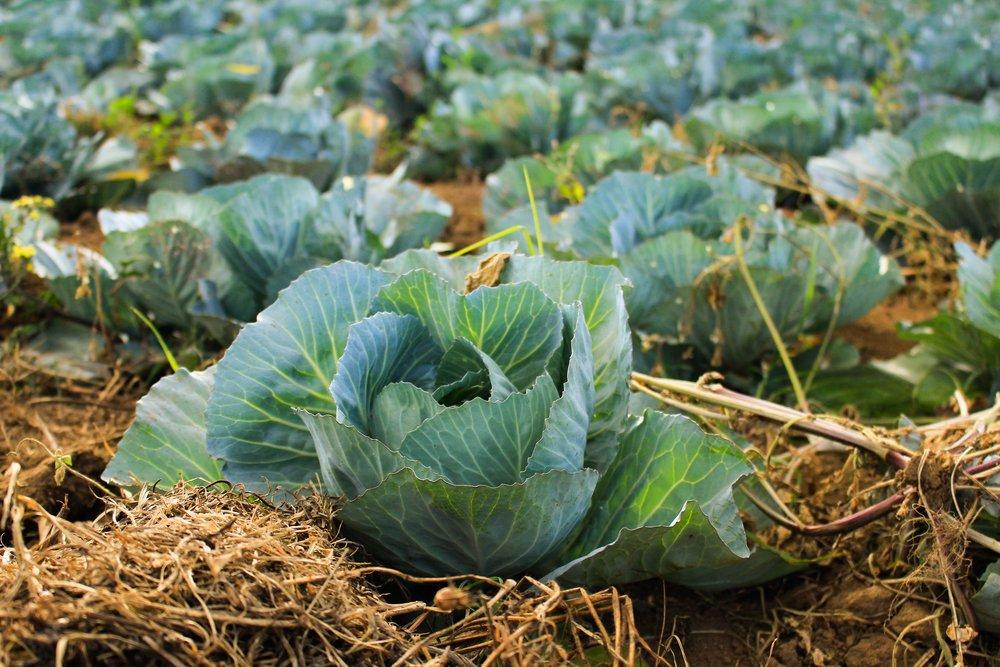 Organische mineralen, makkelijk opneembaar komen van vers groen, planten en groenten