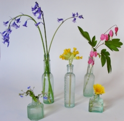 bluebell, cowslip, speedwell, dicentra and dandelion all make great flower essences