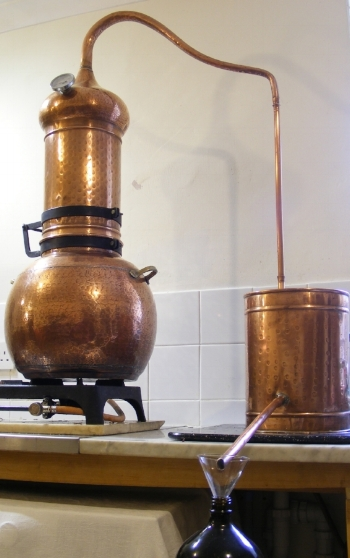 Distilling hydrosols with an alembic still