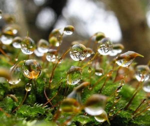 water drops website.jpg