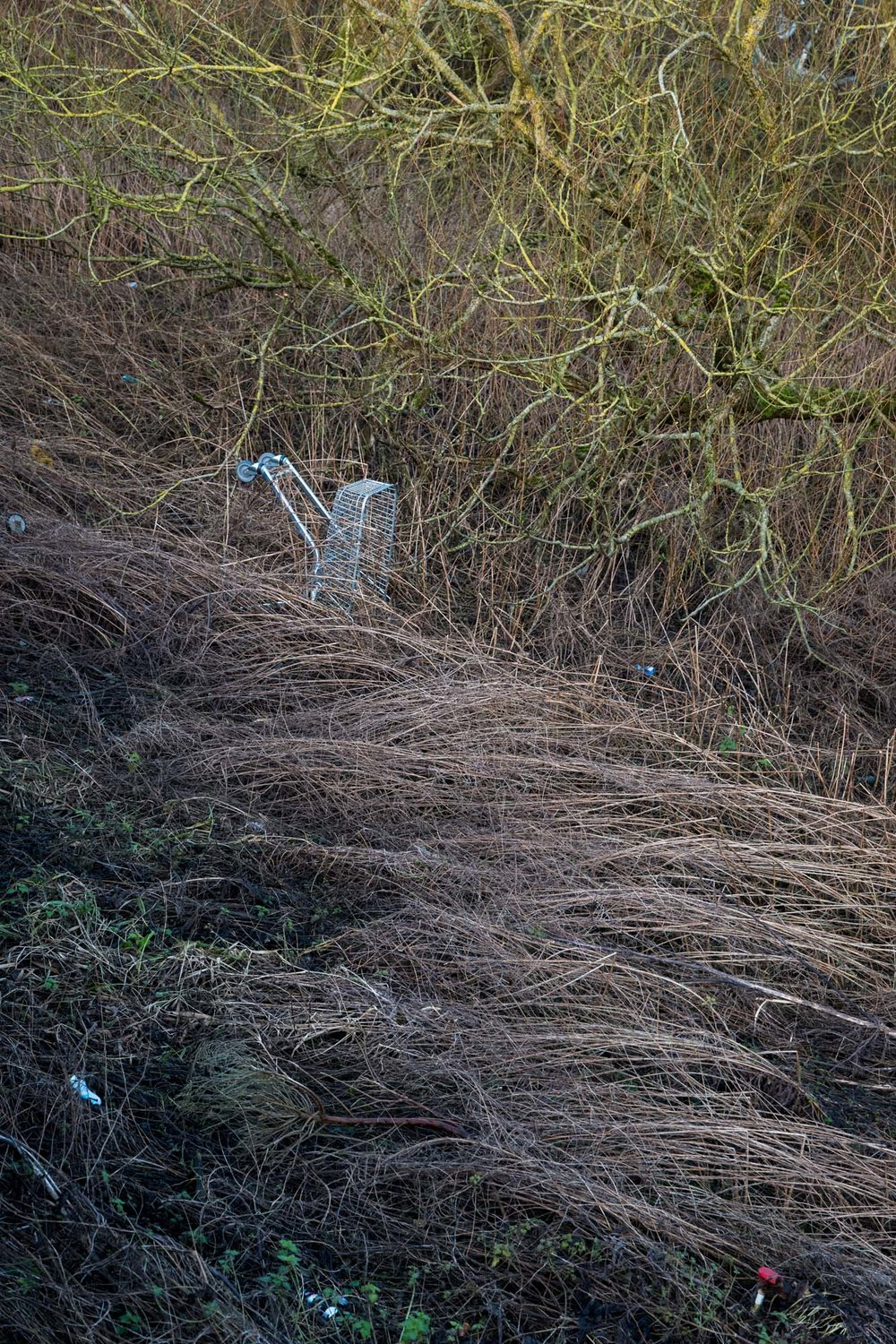 Shopping Trolley in a Ditch
