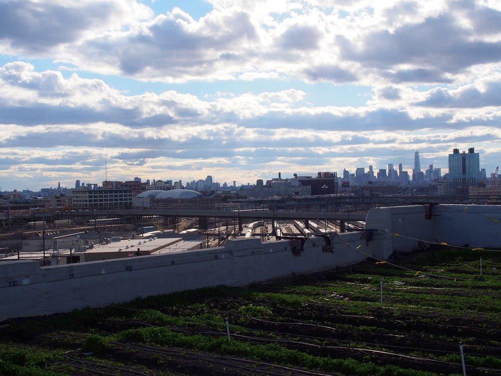 Brooklyn Grange Farm
