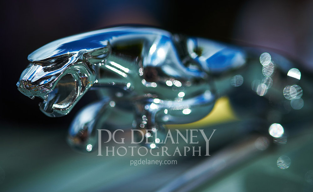 Jag Mascot 640 high watermarked.jpg