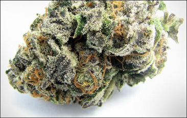 white-tahoe-cookies-cannabis-strain.jpg