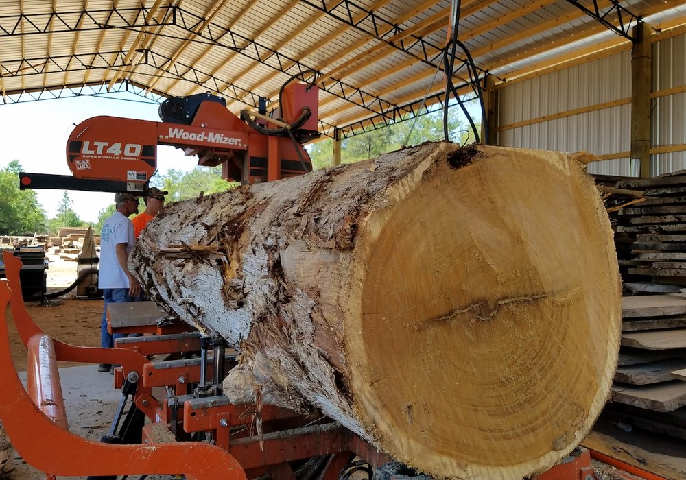 close up of log on saw 2.jpg