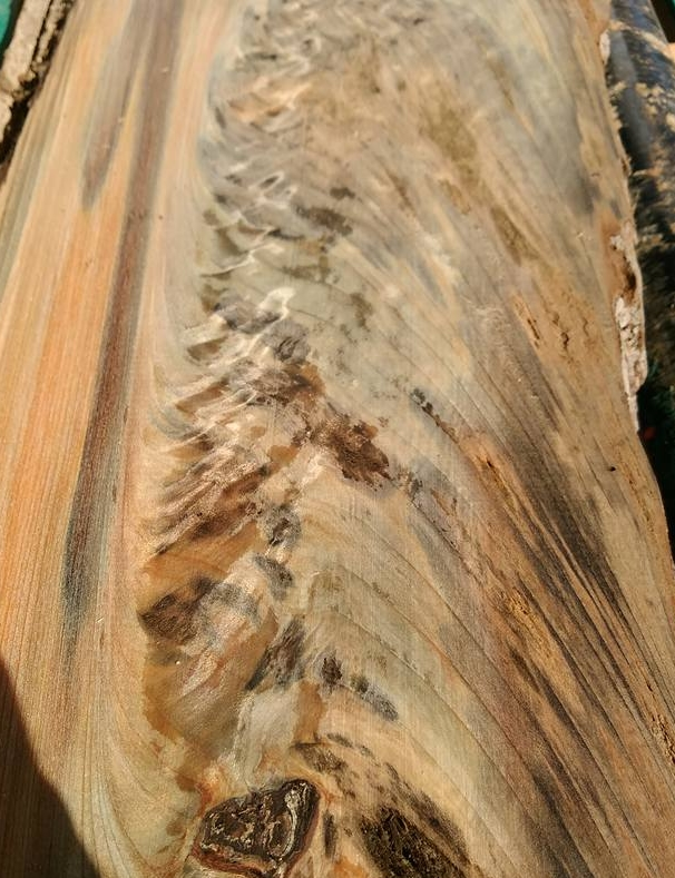 Mottled Sinker Cypress