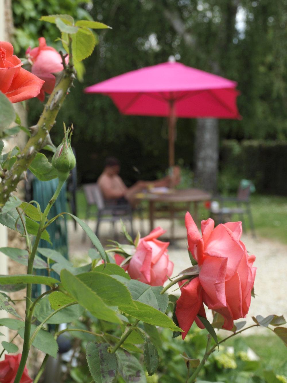 Little Maldod Gite Roses.JPG