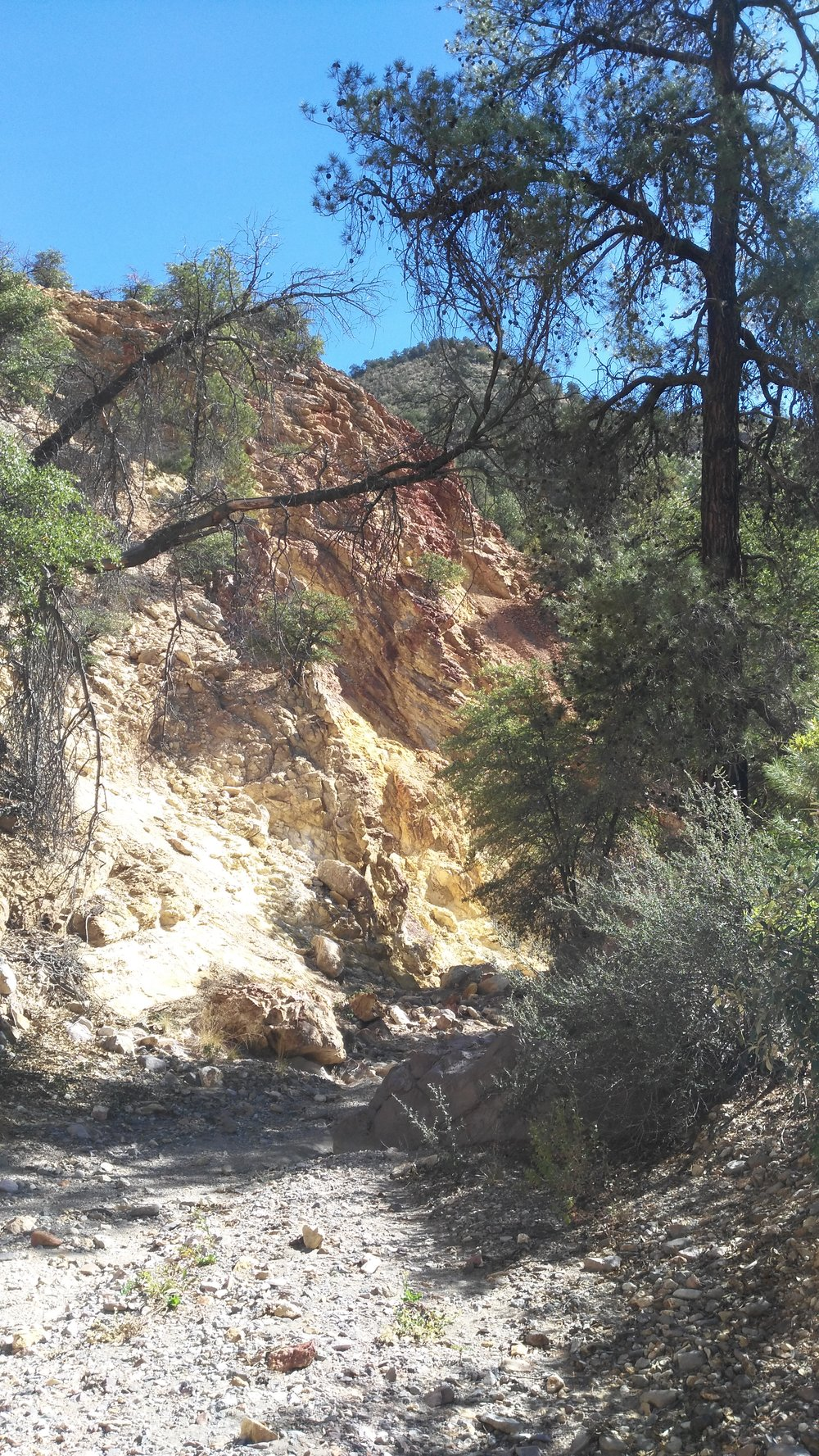 Yellow rock on canyon walls at Gila Wilderness