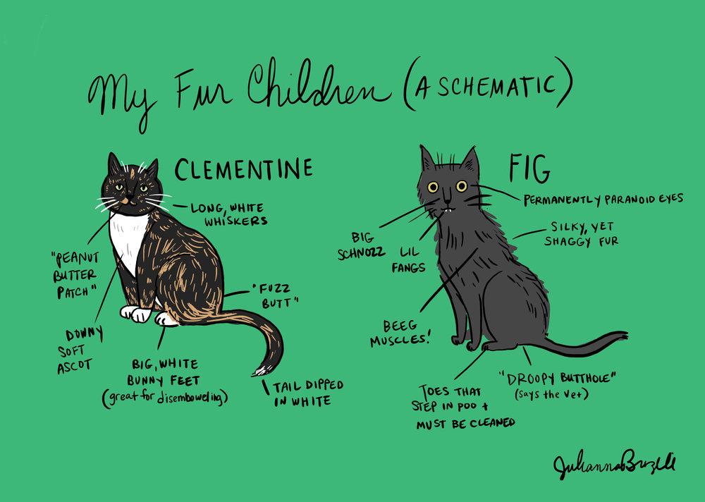 Cat Schematic.jpg