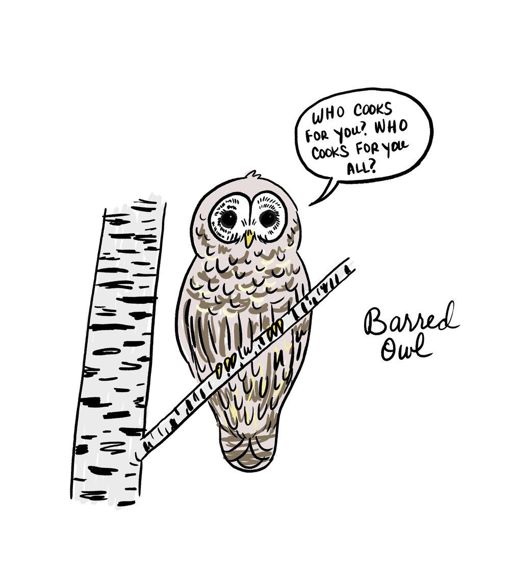 Barred Owl UPdate.jpg
