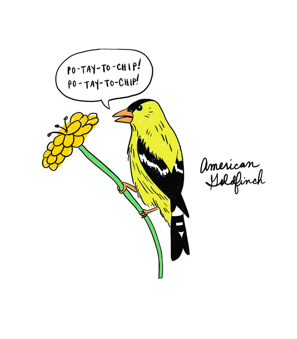 American Goldfinch update.jpg