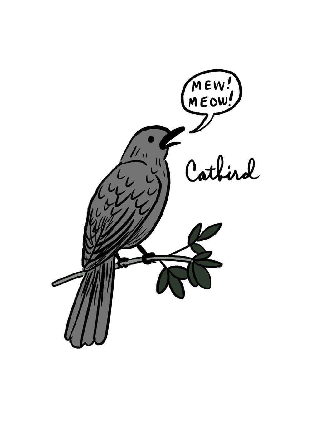 Catbird Update.jpg