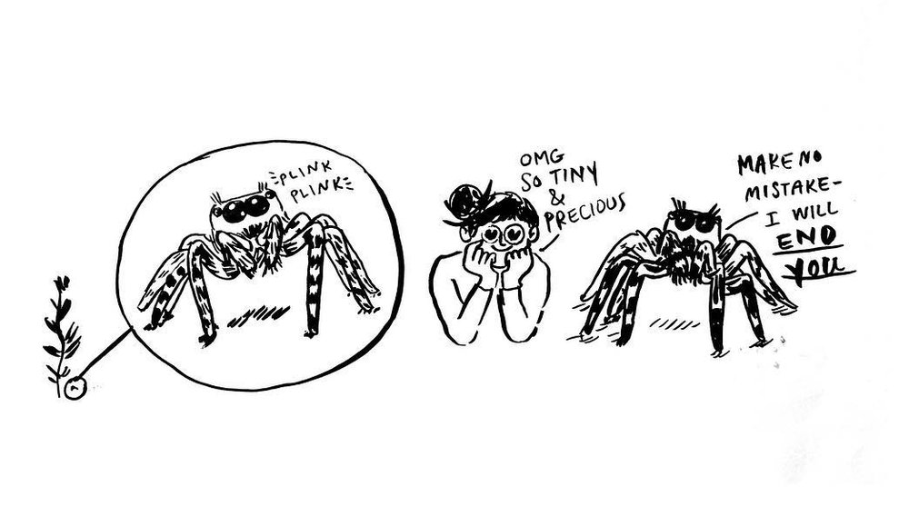 cute spider.jpg