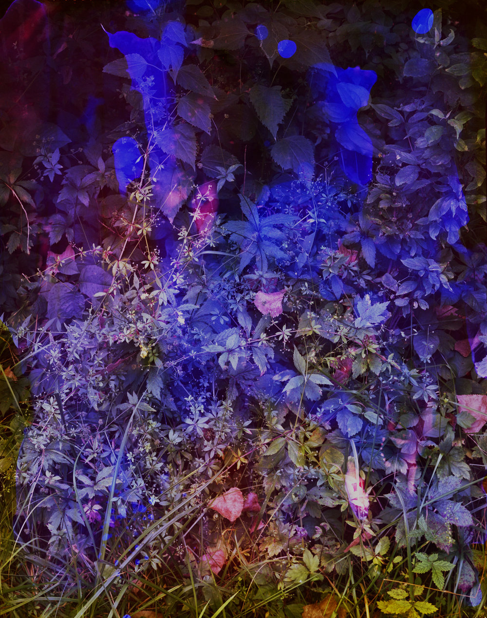 Reenactment 285 (Violet), 50 x 40 in, 2016