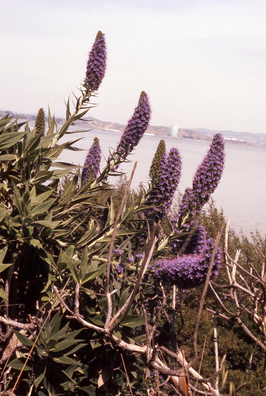 Wildflowers, photo by Oscar Ellis, date unknown