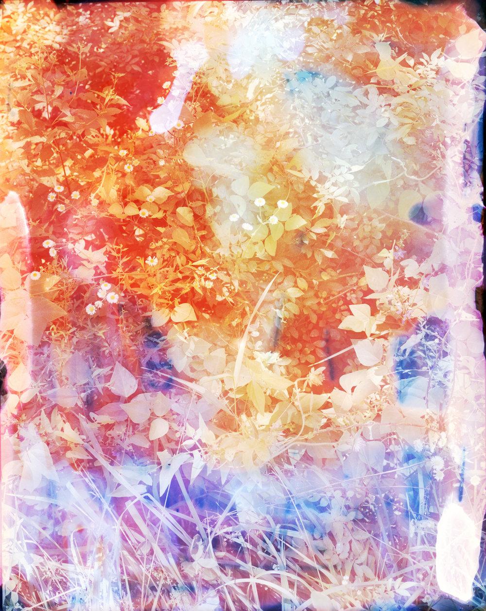 Reenactment 209 (Lavender Spray), 50 x 40 in, 2015