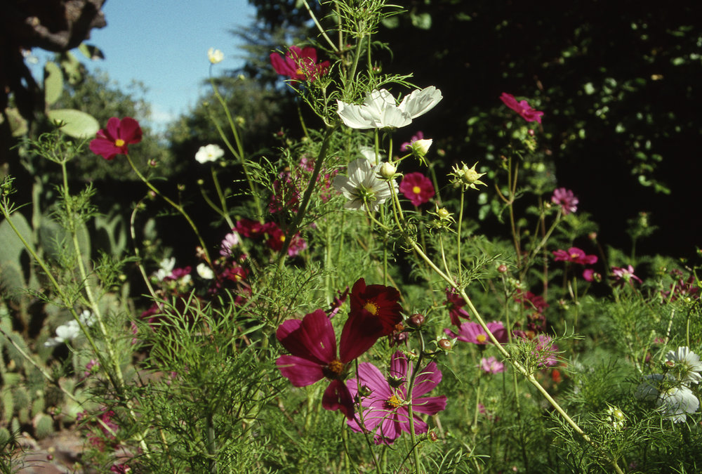 Flowers, photo by Oscar Ellis, date unknown