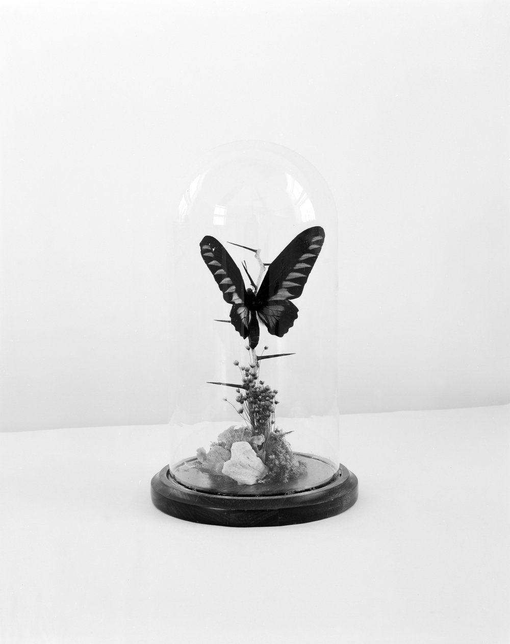 Preserved butterfly, 2013