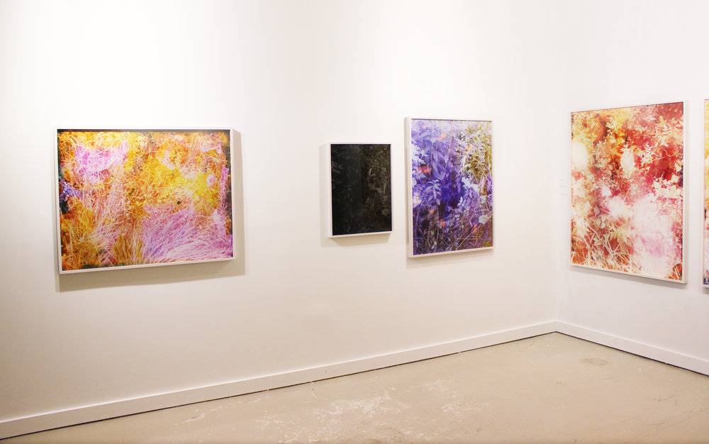 The Harts Gallery