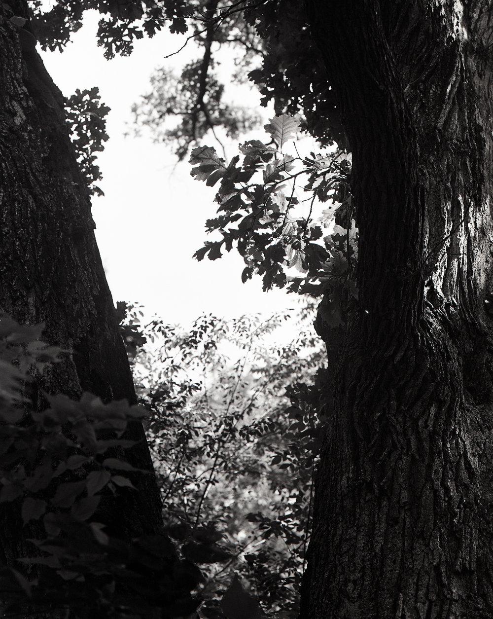 Split oak, 2013