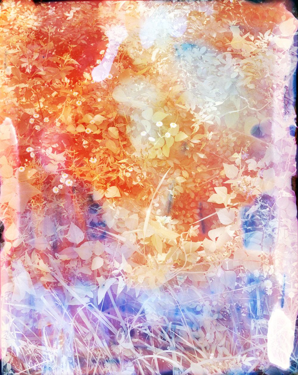 weeds milan440 version2web.jpg