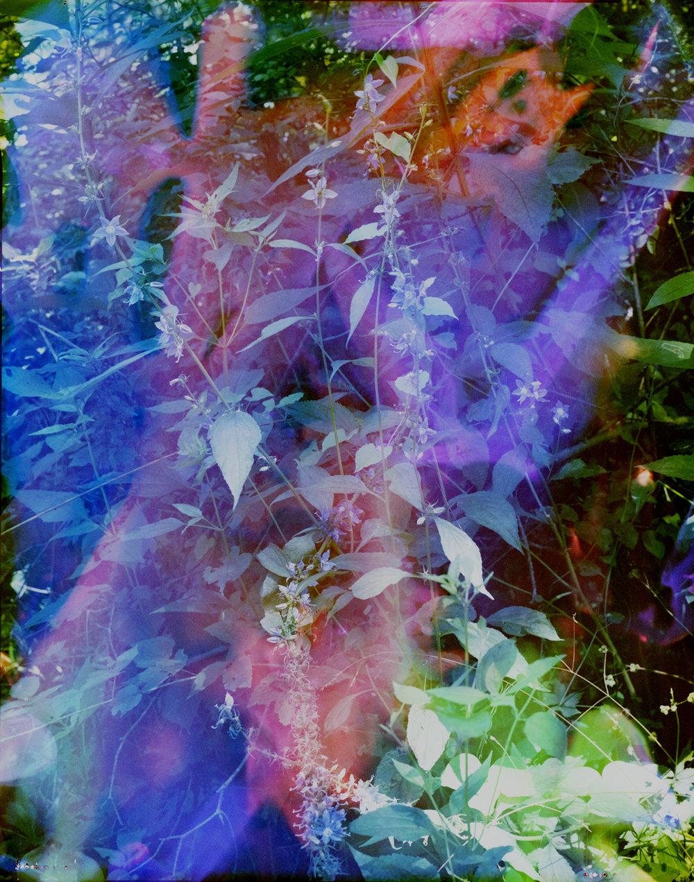 blue flowers in blue_web.jpg