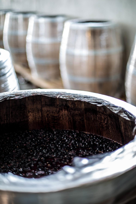 Harvesting Wine in Bordeaux