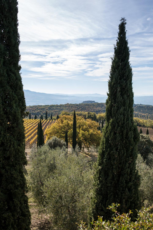 Vineyards of Tuscany
