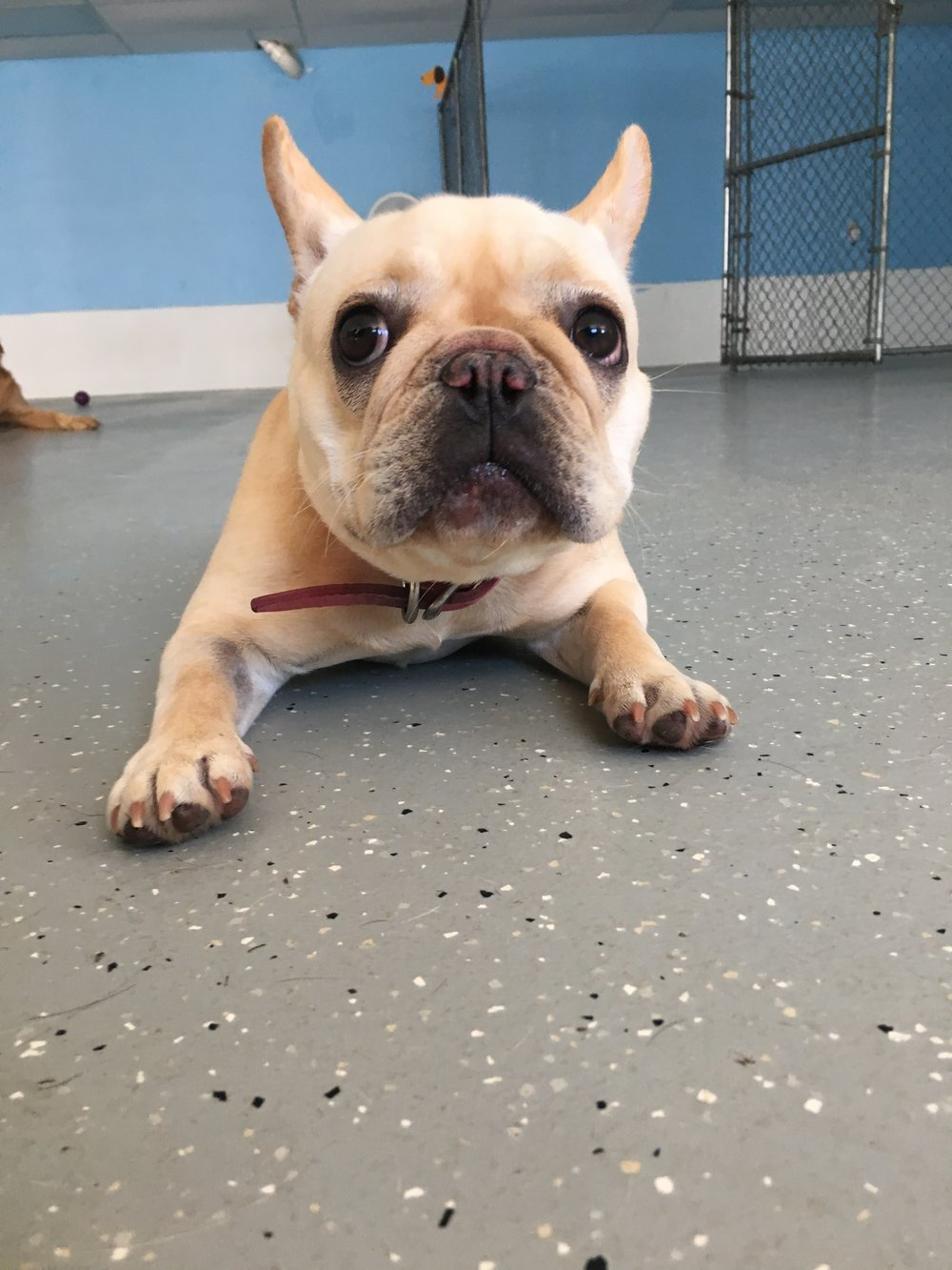 Dog Training - Hanover, MA