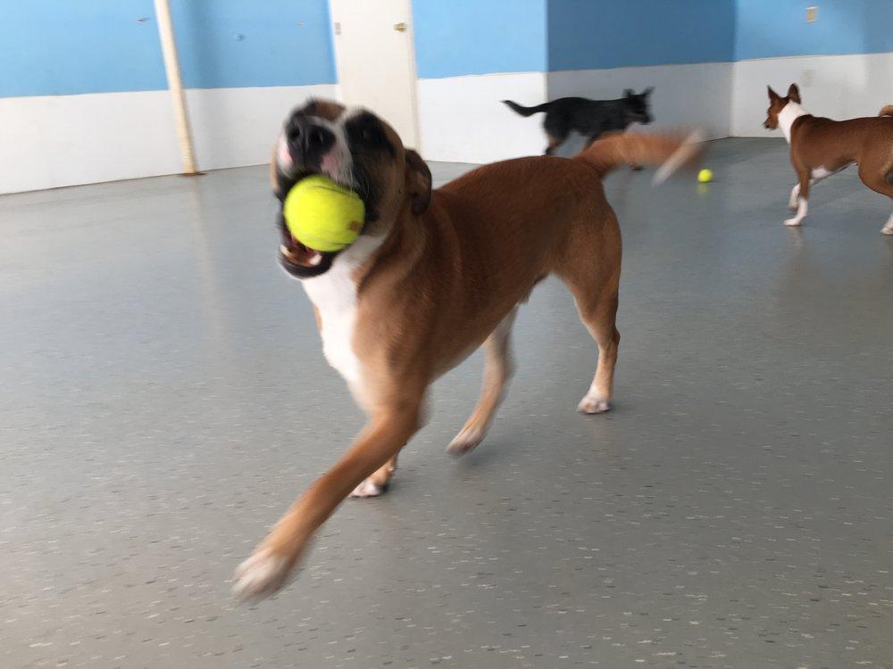 Dog daycare - Hanover, MA