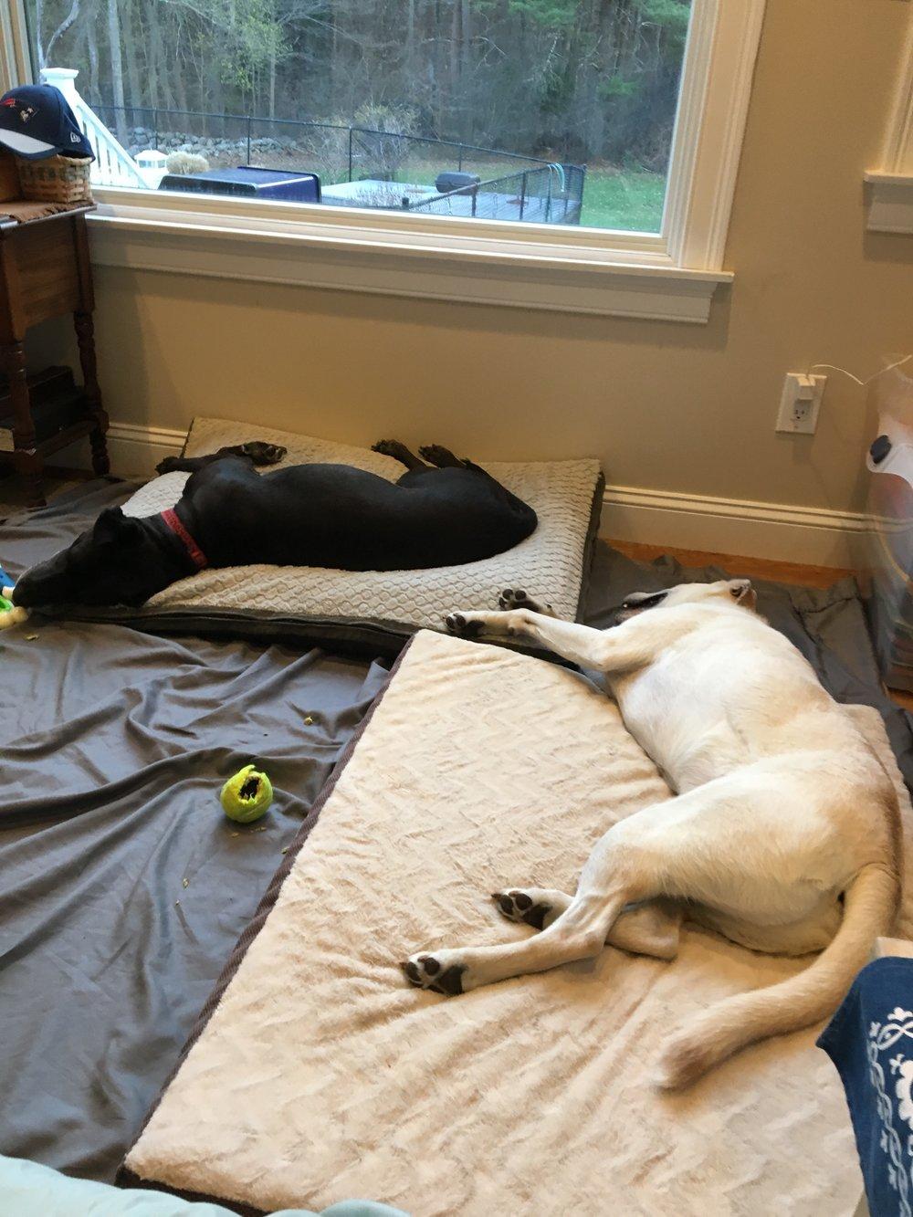 Dog Boarding - Hanover, MA