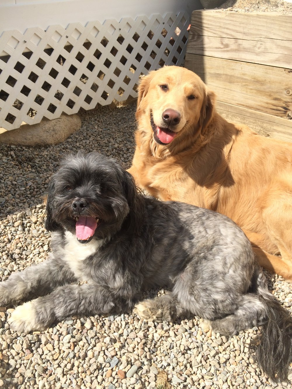 Dog Daycare - South Shore, MA