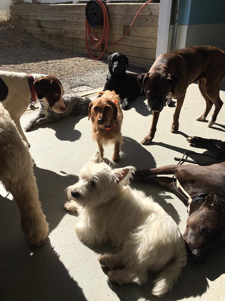 Best Dog Daycare